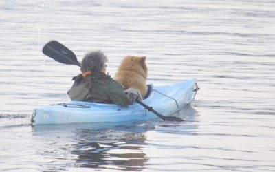 5 Best Kayaks for Dogs