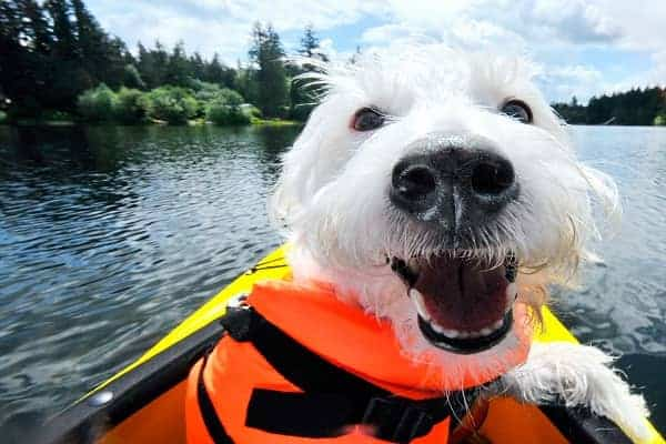 Dog enjoying a kayak ride
